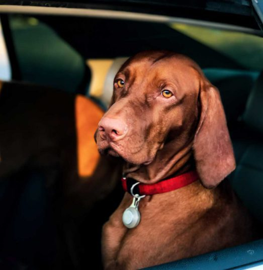 Traveling With Your Furry Friend Has Never Been Simpler